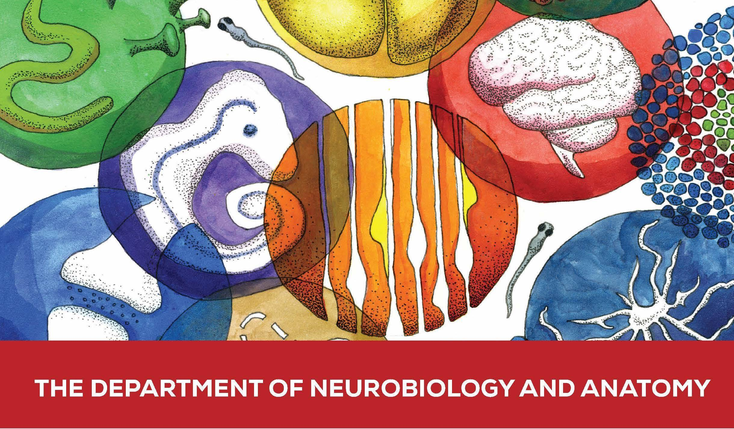 Department of Neurobiology and Anatomy